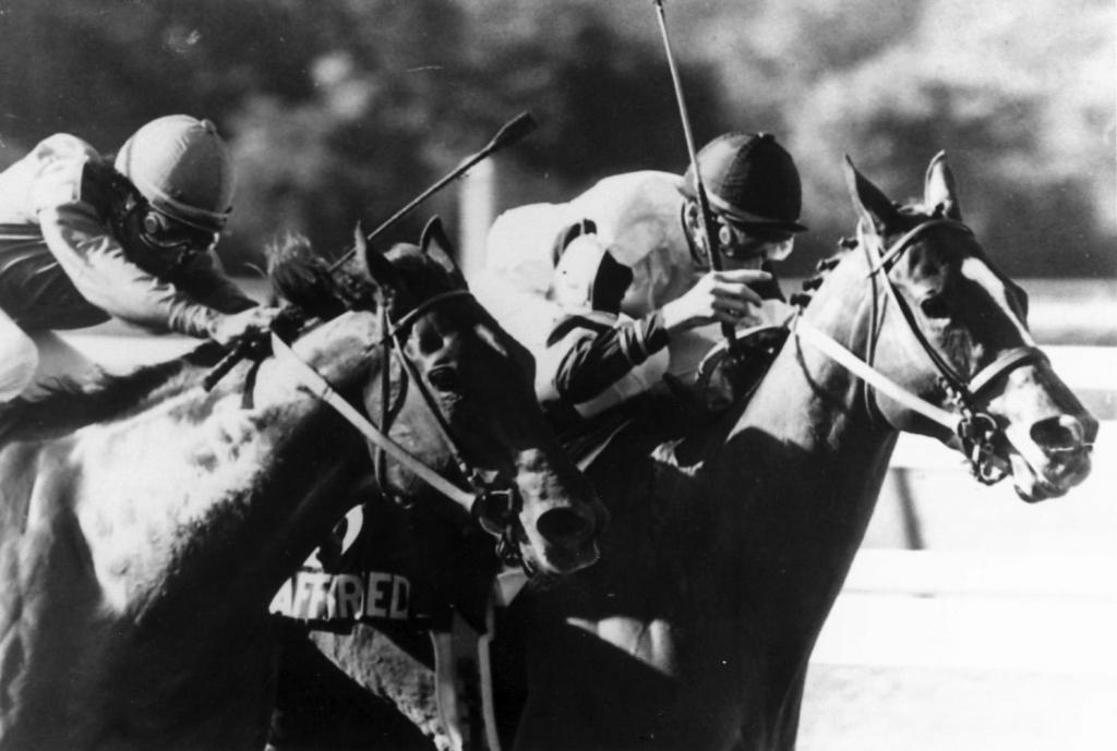 Affirmed wins an extremely close Belmont Stakes battle with Alydar. (Bob Coglianese/BloodHorse Library)
