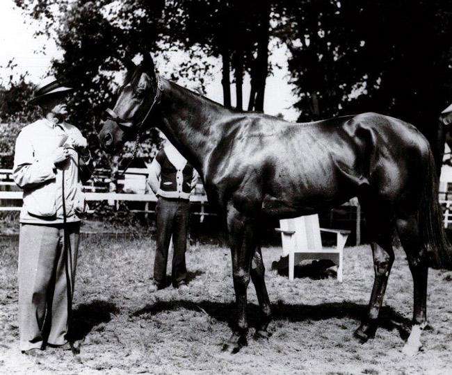 Assault after getting a bath at the track as a 3-year-old. (Keeneland Library)