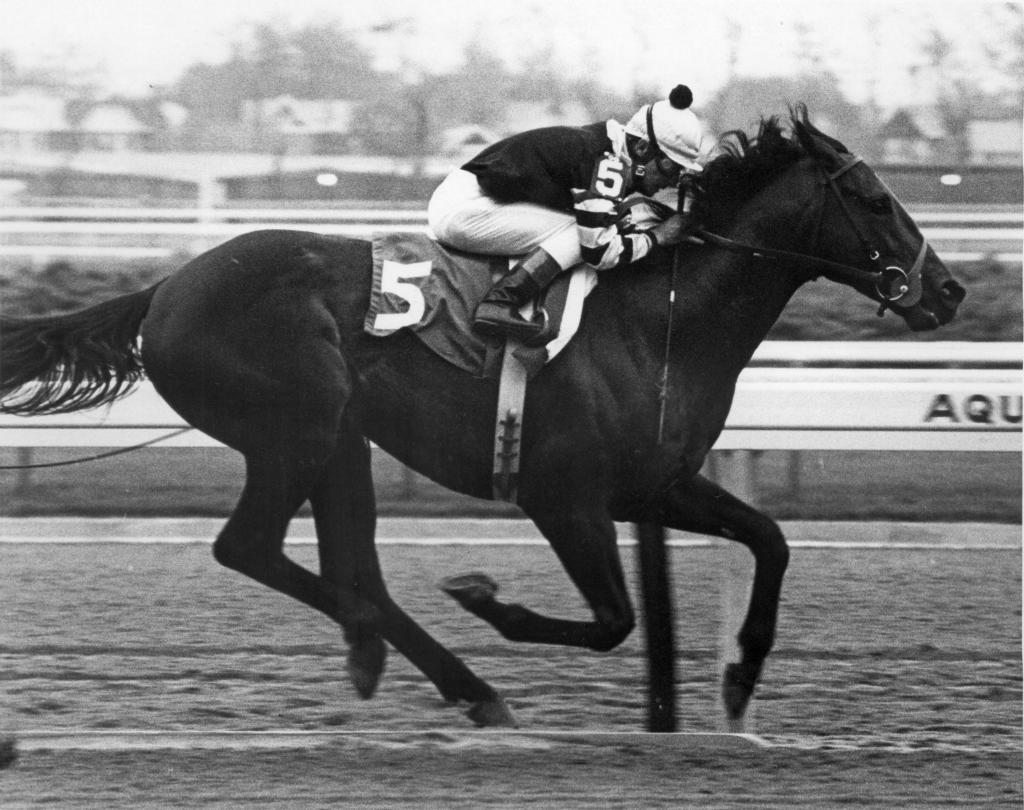 Seattle Slew winning 1977 Wood Memorial Stakes. (Blood-Horse/Bob Coglianese)