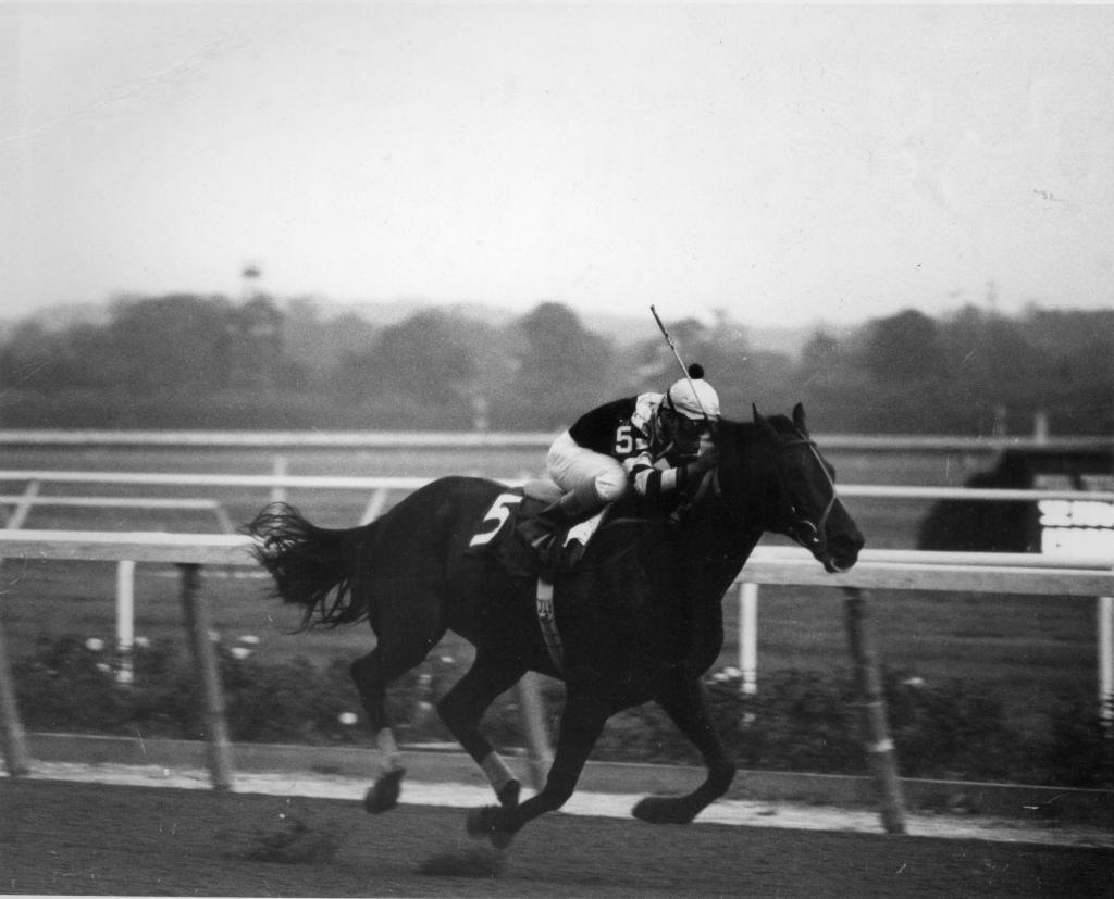 Seattle Slew and jockey Angel Cordero Jr.; winning the 1978 Marlboro Cup. (Blood-Horse/Bob Coglianese)