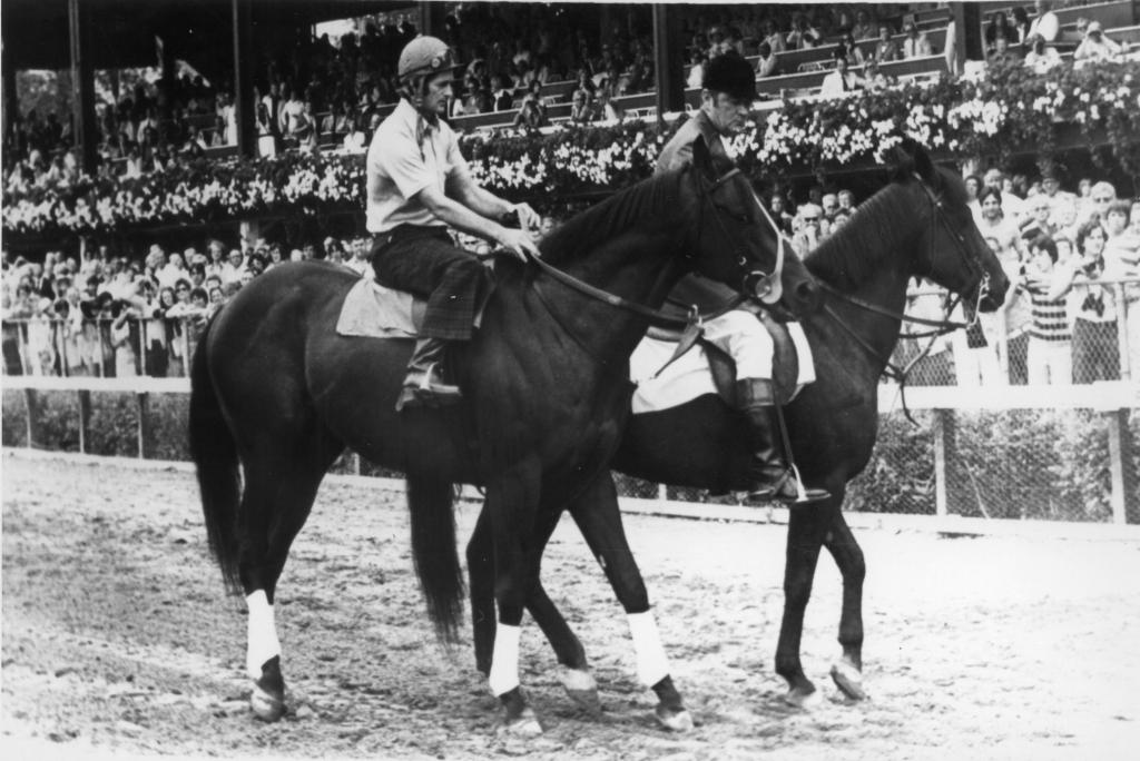 Seattle Slew at Saratoga Race Course on Seattle Slew day. (Blood-Horse/Bob Coglianese)
