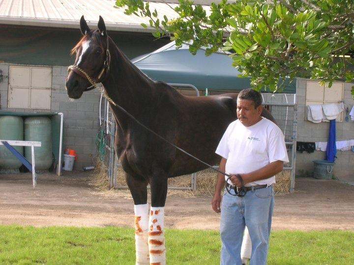 The Queen of Camelot and barn assistant Salvador Lopez. (Cynthia Holt photo)