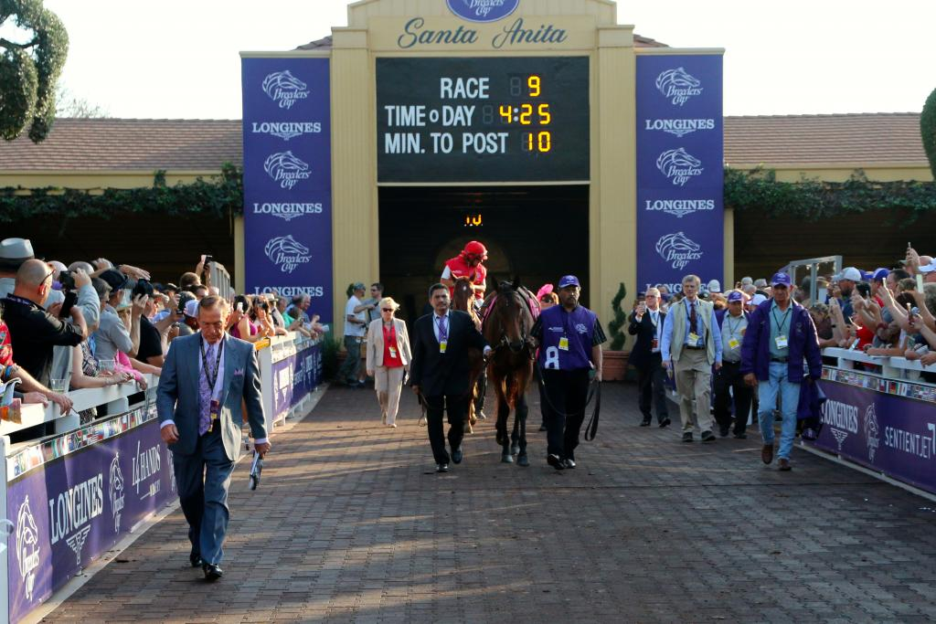 Beholder, the hometown hero, was greeted by cheers from the crowd as she walked calmly into the paddock for the final race of her incredible career. (Penelope P. Miller/America's Best Racing)
