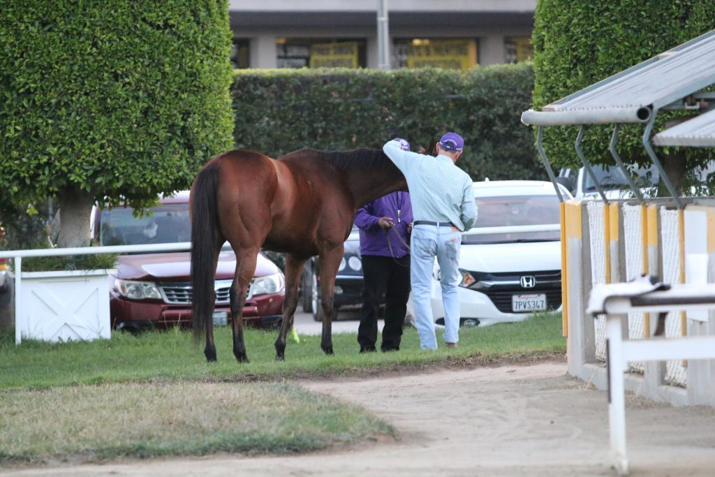 Then, the Distaff winner ended her career the way a horse should: with a quiet snack under the setting sun, surrounded by the people who love her. I'll miss seeing Beholder at the track, but I'll always cherish the memories she gave me. (Penelope P. Miller/America's Best Racing)