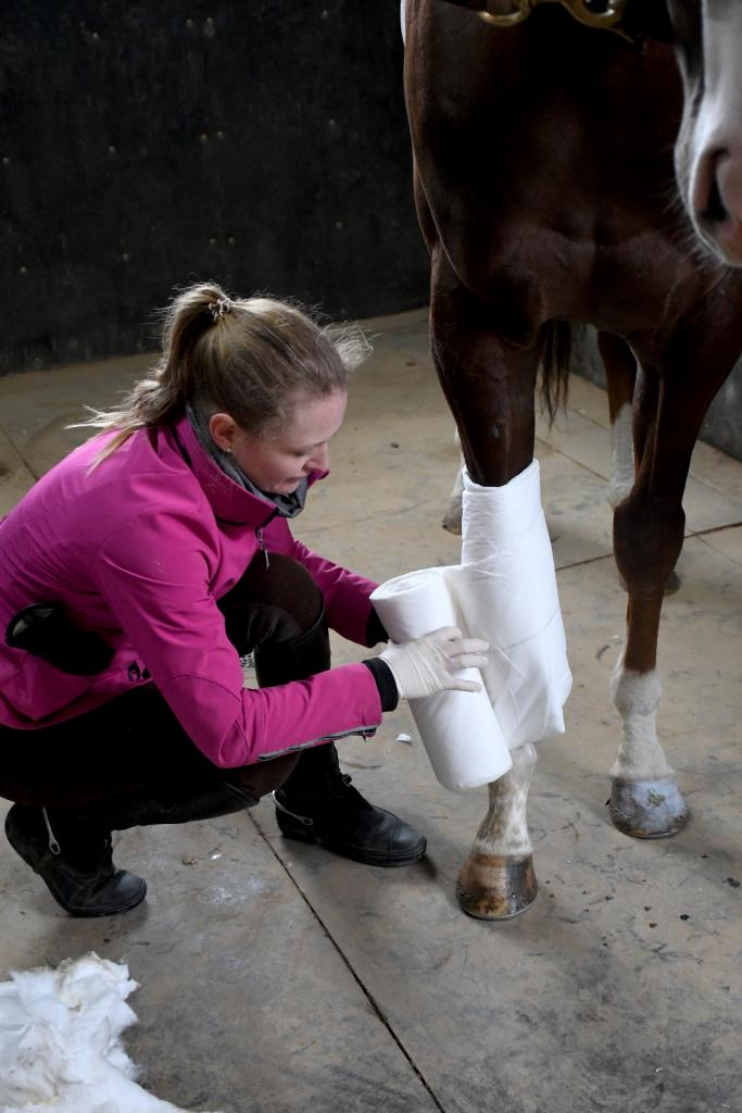 London gets his new bandage. (Melissa Bauer-Herzog/America's Best Racing)