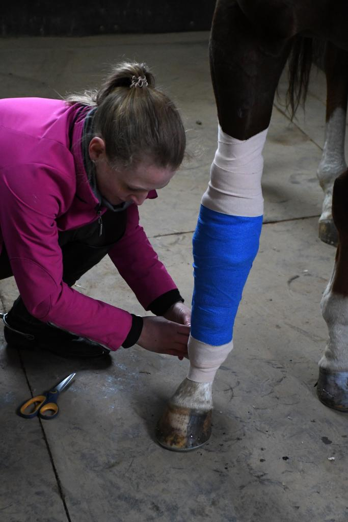 London showing his UK pride with his new bandage. (Melissa Bauer-Herzog/America's Best Racing)