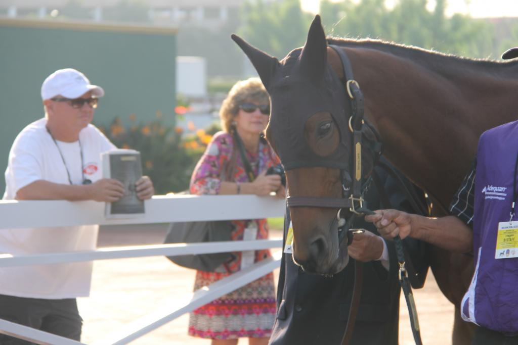 Champion Beholder (the Bat Mare) (Ariel Cooper photo)