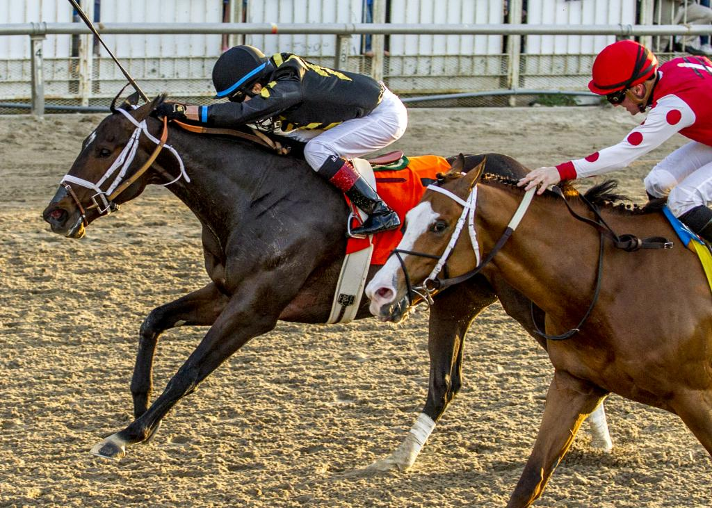 Bravazo winning the Risen Star Stakes on Feb. 17. (Hodges Photography/Amanda Hodges Weir)