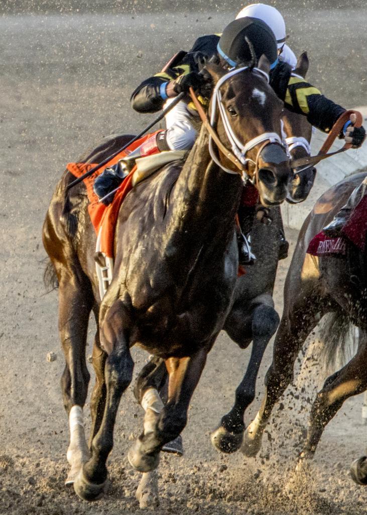 Bravazo winning the Risen Star Stakes. (Kristina Taylor/Hodges Photography)