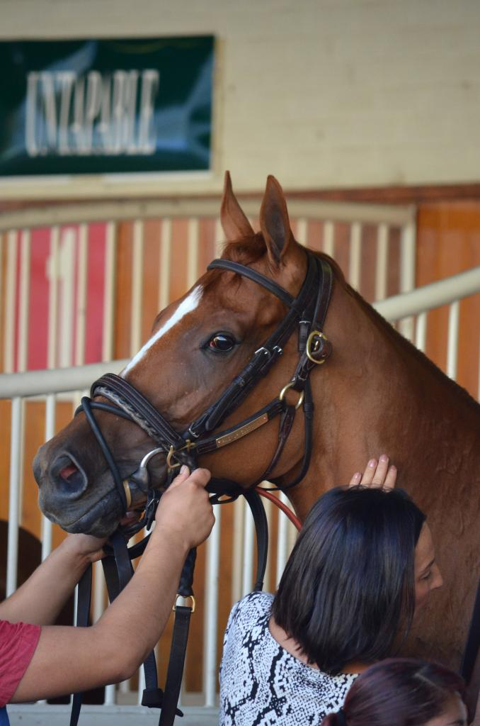 In the paddock, Paid Up Subscriber seemed to be soaking up the attention her connections gave her while she was saddled. She didn't seem to mind getting her picture taken either.  (Melissa Bauer-Herzog/America's Best Racing)