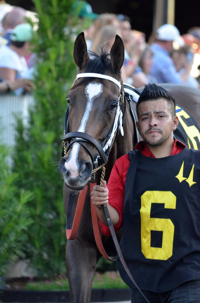 After winning multiple stakes at Woodbine over the last few years, Brooklynsway has branched out into the U.S. graded stakes scene this year. Both she and her groom have obviously learned how to pose for the cameras in the paddock.  (Melissa Bauer-Herzog/America's Best Racing)