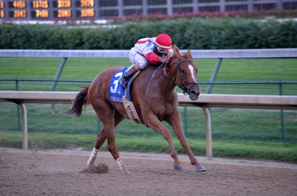 The second time by, Paid Up Subscriber raced her way into the Longines Breeders' Cup Distaff with a three-length victory in the race. (Melissa Bauer-Herzog/America's Best Racing)