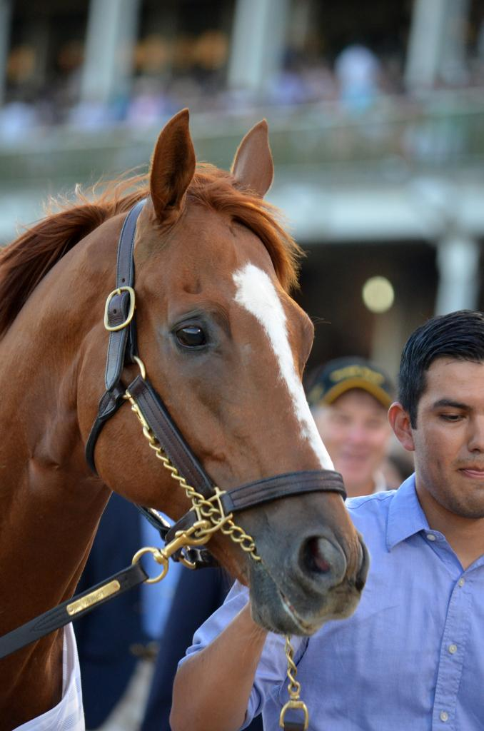 Wise Dan's accomplishments are too long to list here but the two-time Horse of the Year was at the track to parade before the race that had been renamed in his honor this year. (Melissa Bauer-Herzog/America's Best Racing)