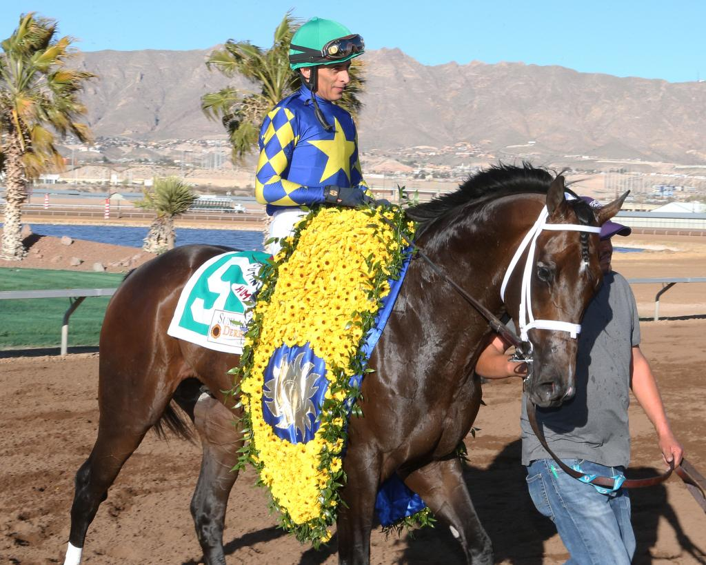 Sunland Derby winner Cutting Humor. (Coady Photography)