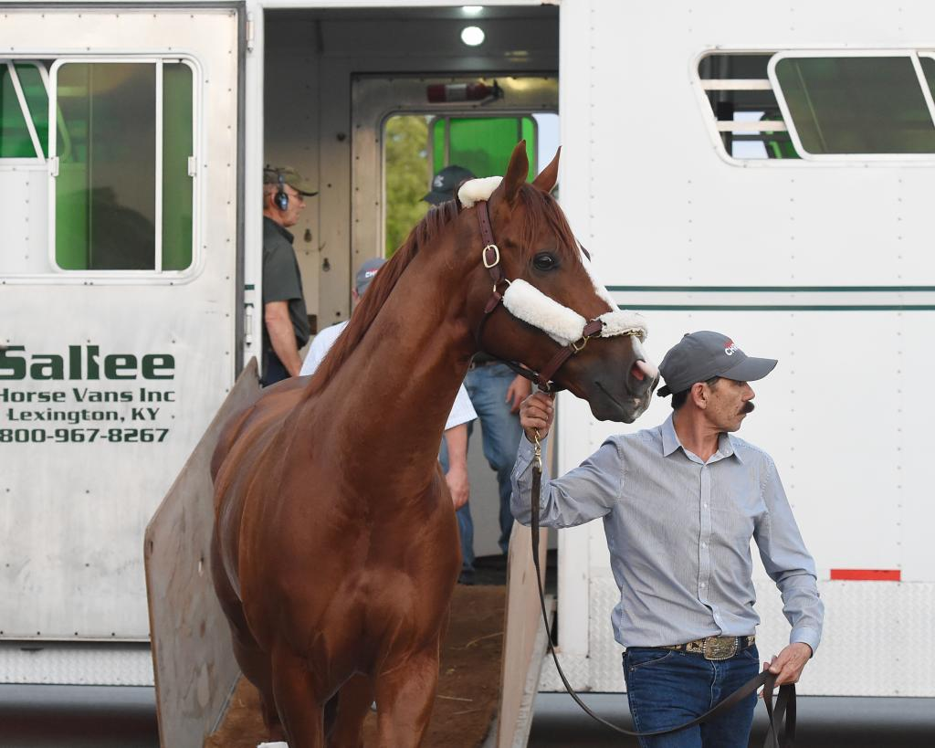 California Chrome arrives at Gulfstream on Jan. 6. (Leslie Martin/Gulfstream Park)