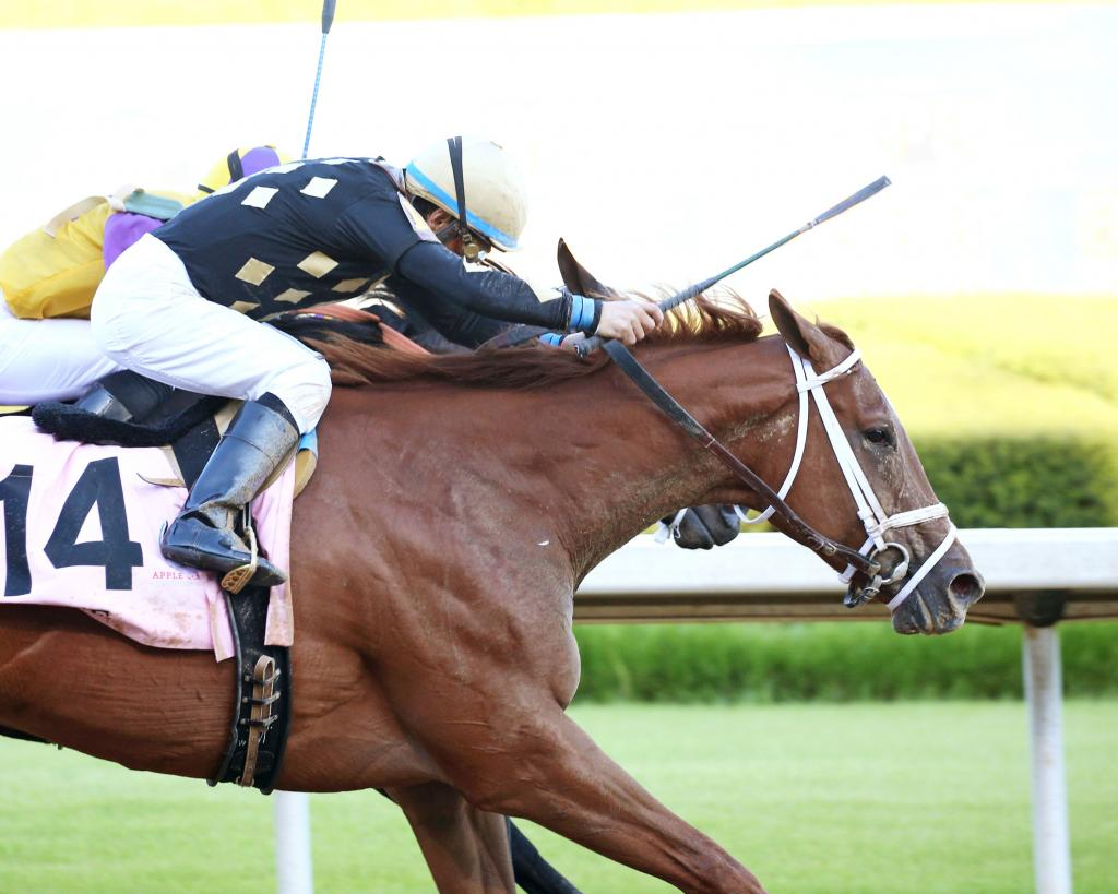 Grade 1 winner Ce Ce, the third-place finisher in the Grade 1 Clement Hirsch Stakes in August at Del Mar. (Coady Photography)