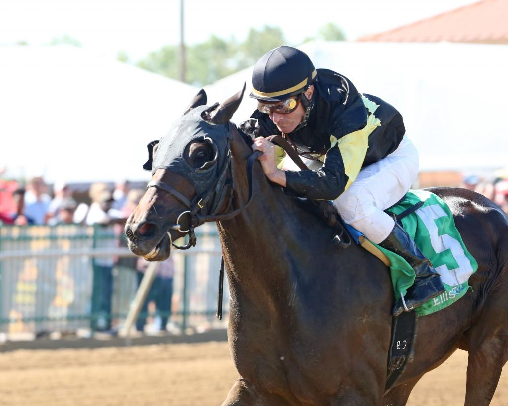 Graded stakes winner Champagne Problems (Coady Photography)