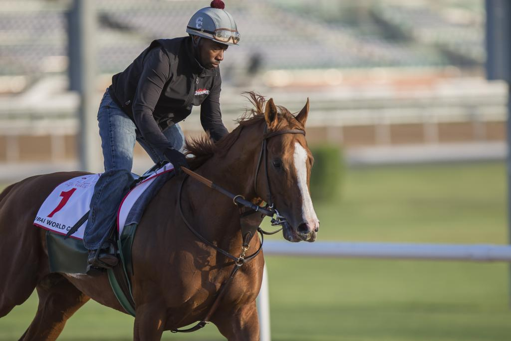California Chrome and exercise ride Dihigi Gladney in Dubai in 2016. (Eclipse Sportswire)