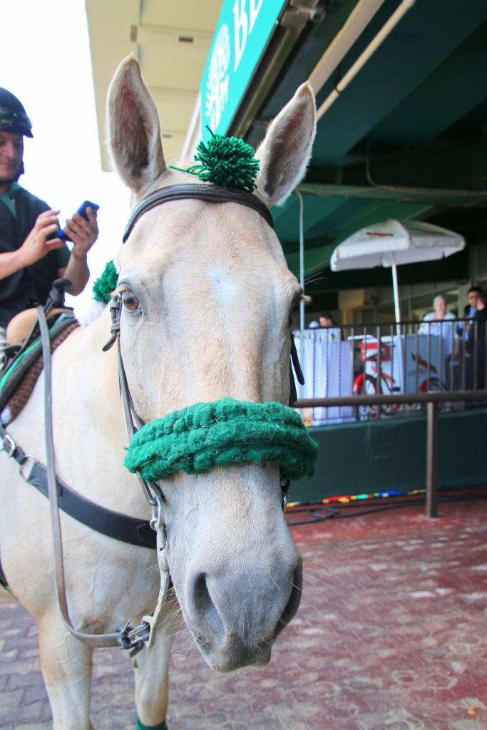 Cisco the pony is all ears for Belmont news. (Julie June Stewart photo)
