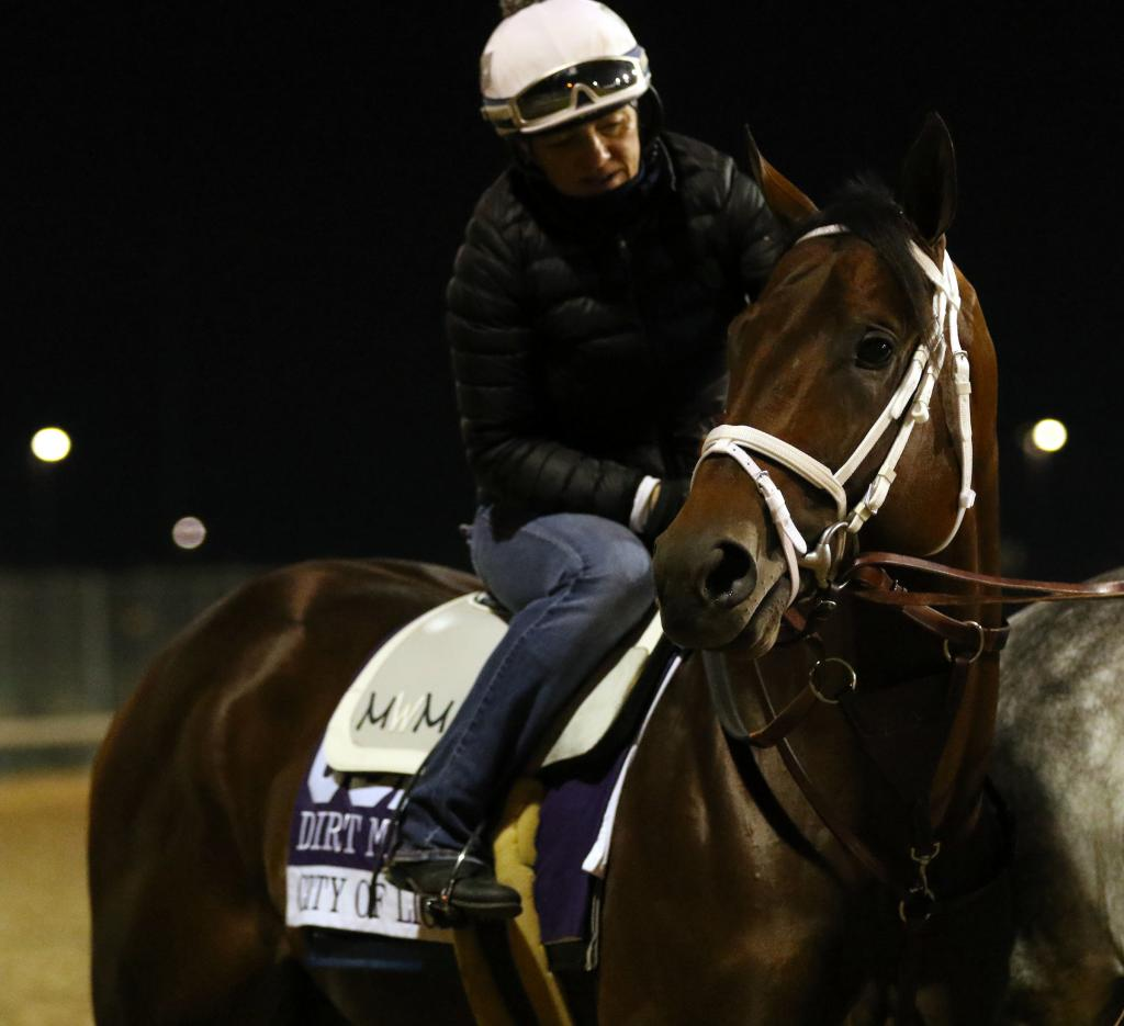 City of Light before his win in the 2018 Breeders' Cup Dirt Mile. (Eclipse Sportswire)