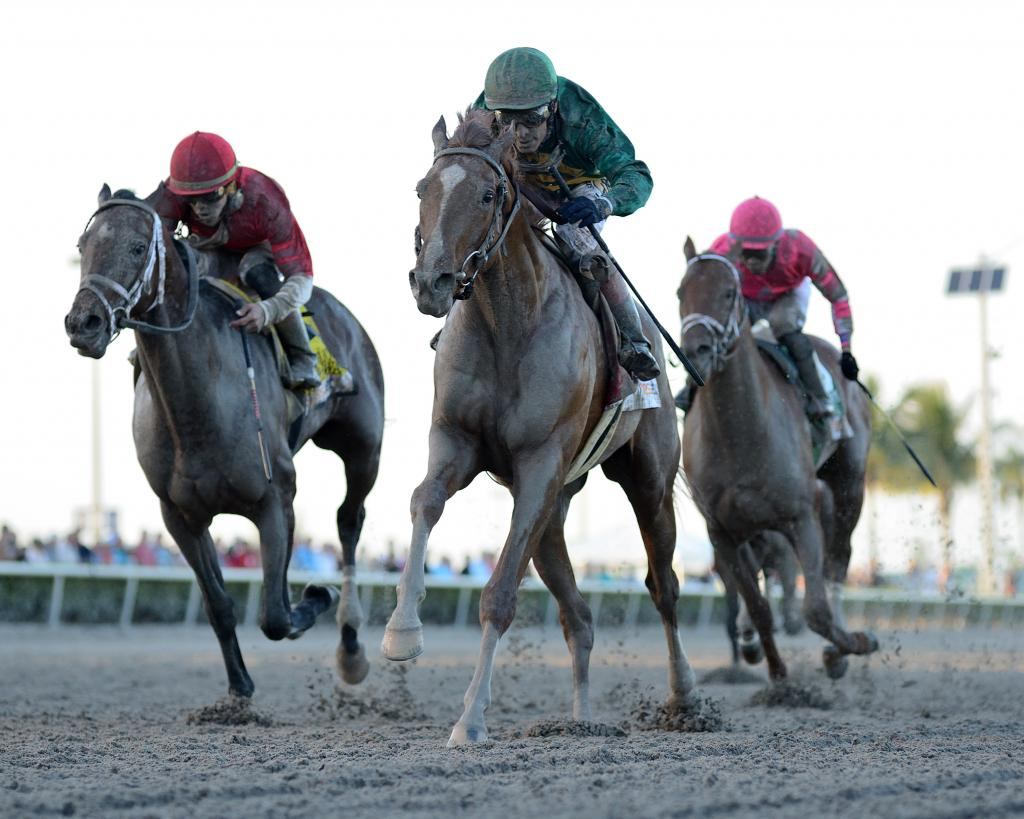 Kentucky Derby Presented by Woodford Reserve runner-up Code of Honor. (Bob Coglianese/Gulfstream Park)