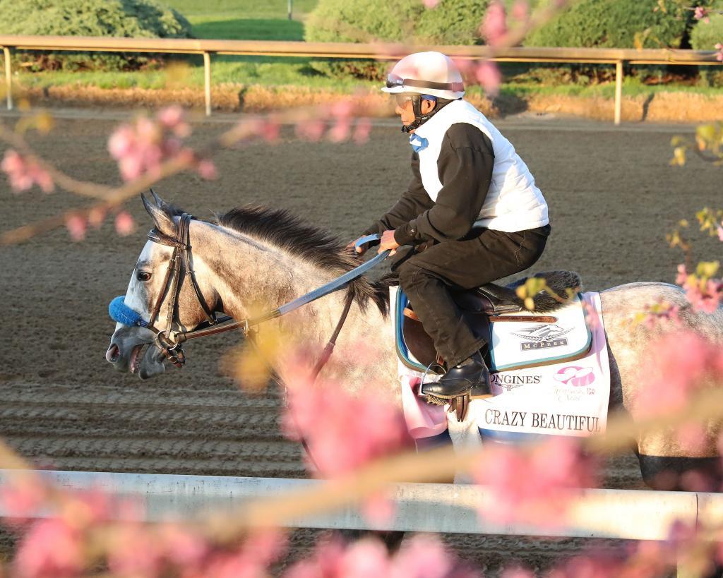 Gulfstream Park Oaks winner Crazy Beautiful. (Coady Photography)