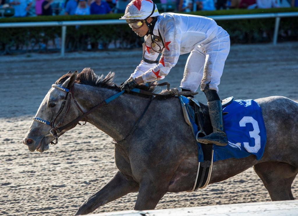 Gulfstream Park Oaks winner Crazy Beautiful. (Eclipse Sportswire)