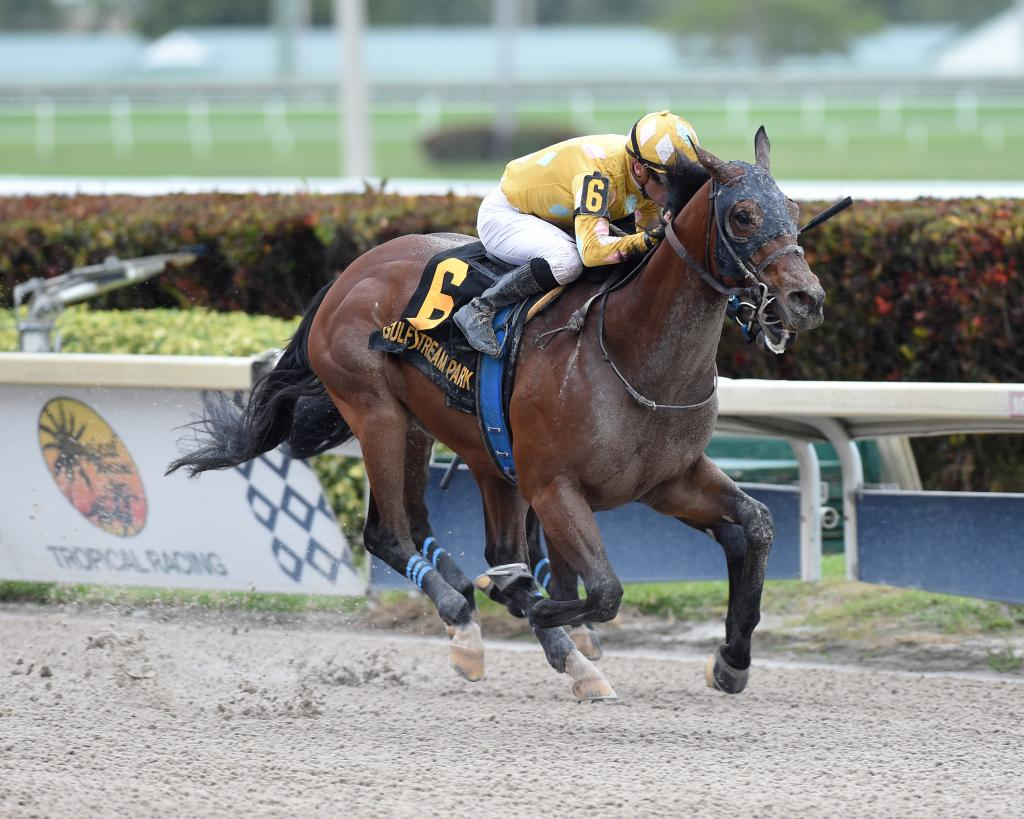 Multiple graded stakes winner Diamond Oops (Nicole Thomas/Gulfstream Park)