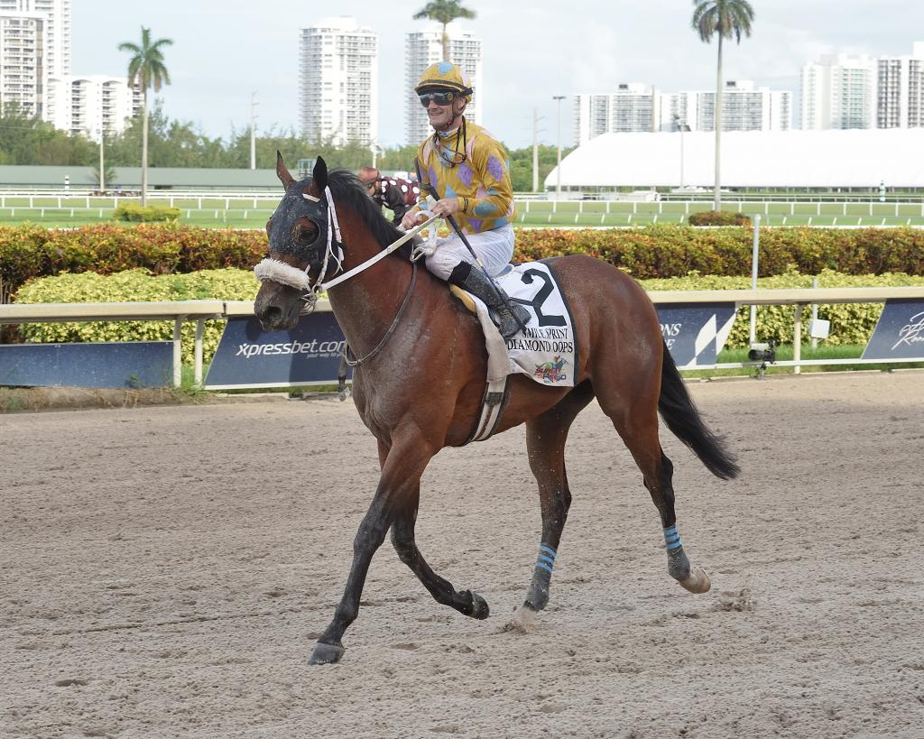 Multiple graded stakes winner Diamond Oops (Lauren King/Gulfstream Park)
