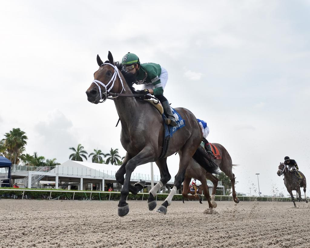 Stakes winner Dr Post. (Ryan Thompson/Gulfstream Park)
