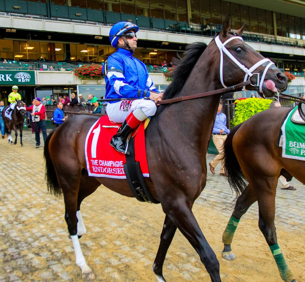 Curlin Stakes runner-up Endorsed. (Eclipse Sportswire)