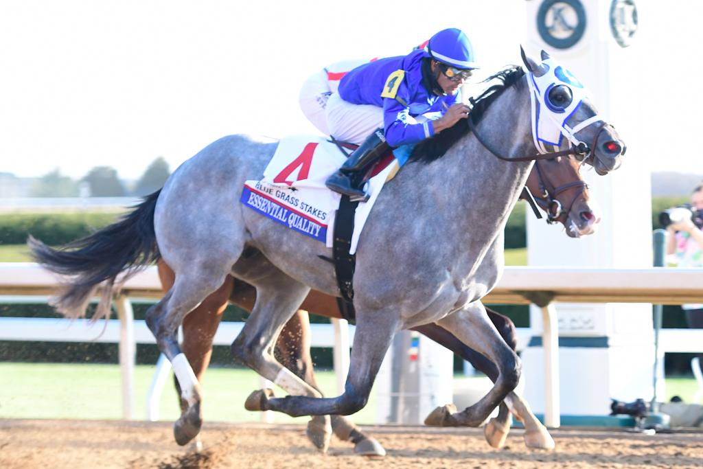 Champion Essential Quality, winner of the Toyota Blue Grass Stakes.