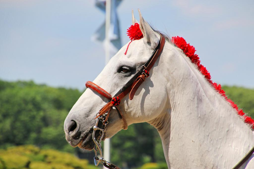 Even the outriders' horses look sharp for Belmont Day. (Julie June Stewart photo)