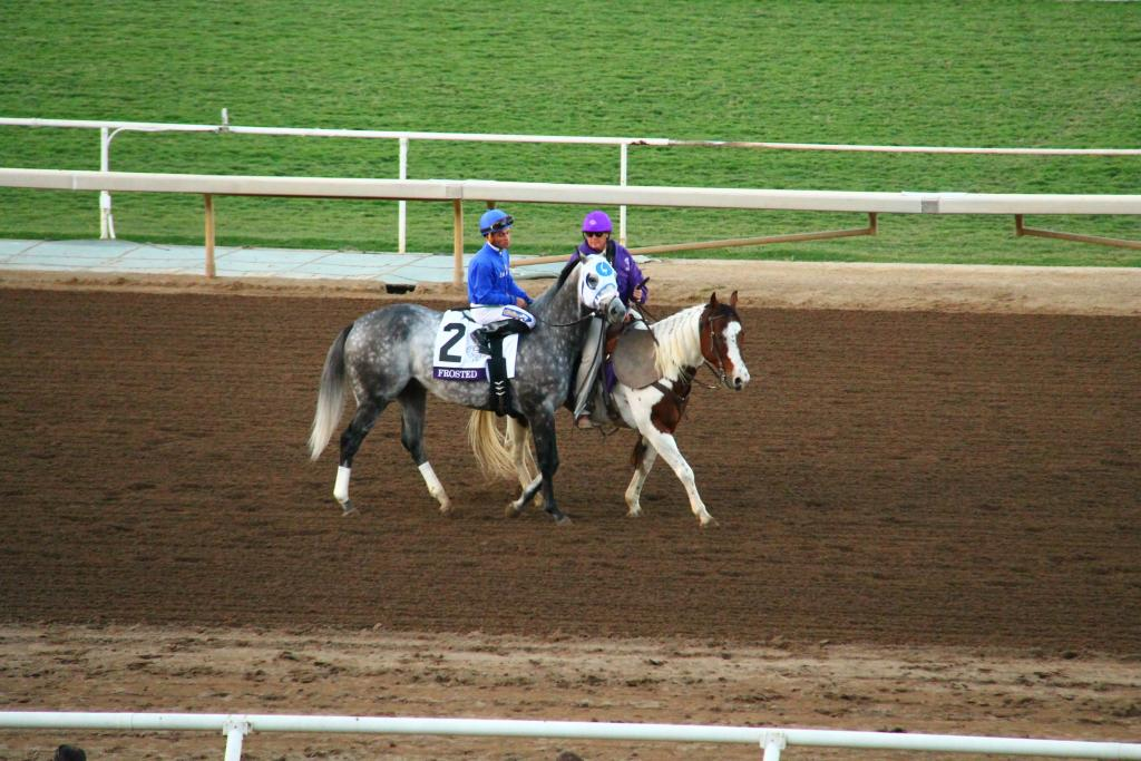 Frosted headed to the starting gate for the Breeders' Cup Classic. (Ariel Cooper photo)