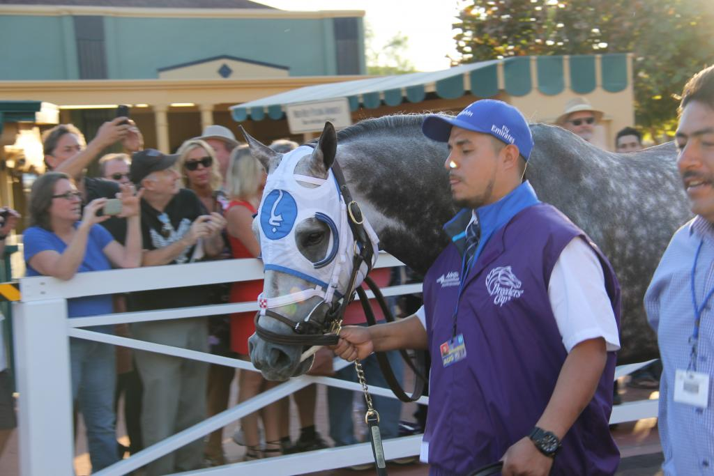 Frosted on the way to the saddling area. (Ariel Cooper photo)