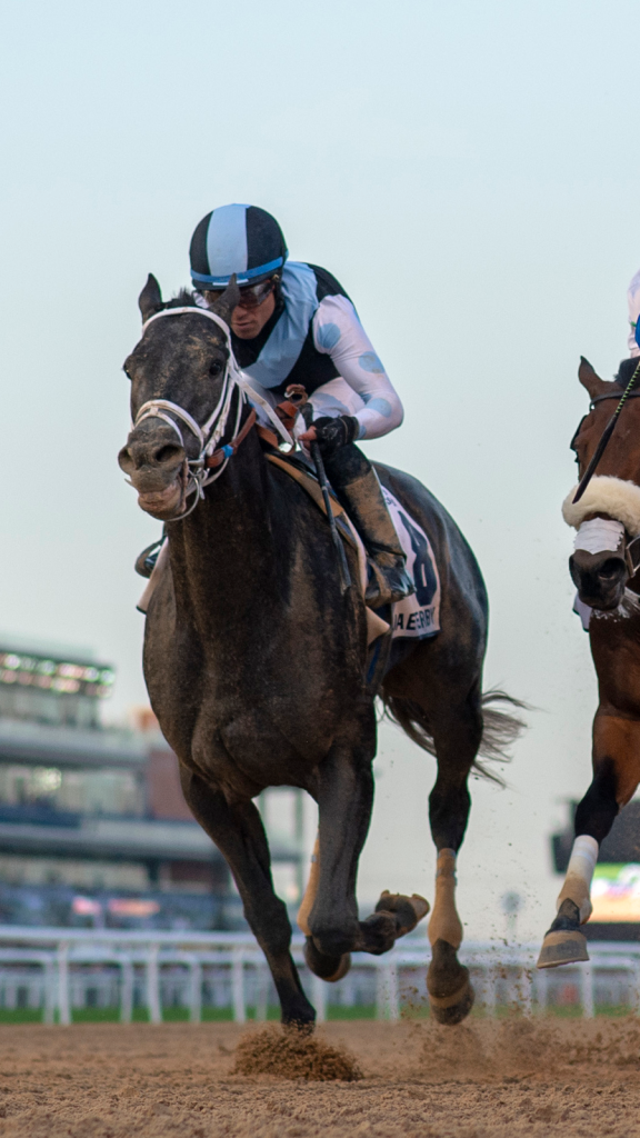 United Arab Emirates Derby runner-up Gray Magician. (Eclipse Sportswire)