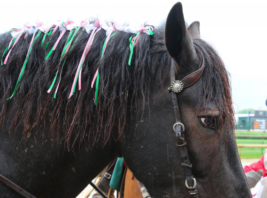 Harley the pony sporting festive ribbons at the Kentucky Derby. (Julie June Stewart photo)
