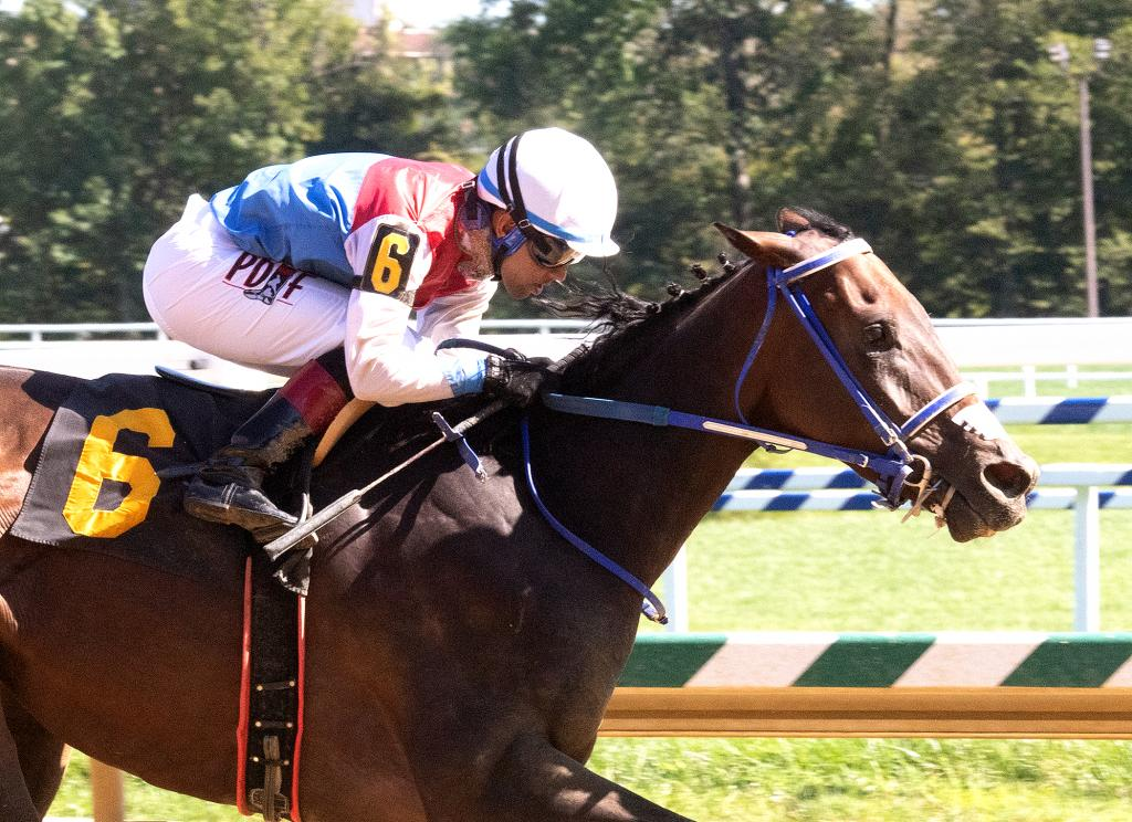 Graded stakes winner Harpers First Ride (Jim McCue/Maryland Jockey Club)