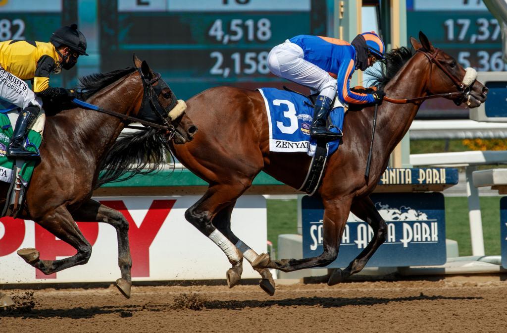 Multiple graded stakes winner Harvest Moon, winner of the Grade 2 Zenyatta Stakes Sept. 27 at Santa Anita Park. (Eclipse Sportswire)