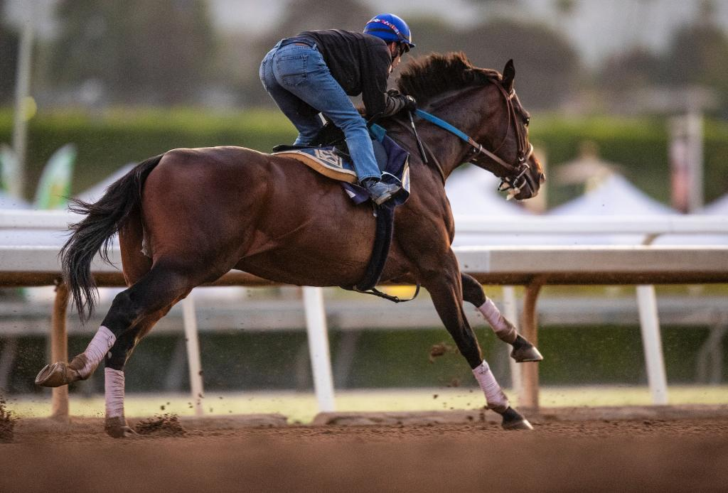 2019 TVG Pacific Classic Stakes winner Higher Power. (Eclipse Sportswire)