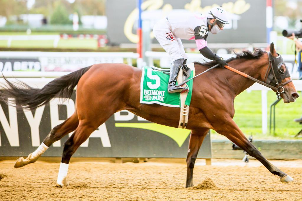 Multiple graded stakes winner Horologist, winner of the Grade 2 Beldame Stakes Oct. 4 at Belmont Park. (Eclipse Sportswire)