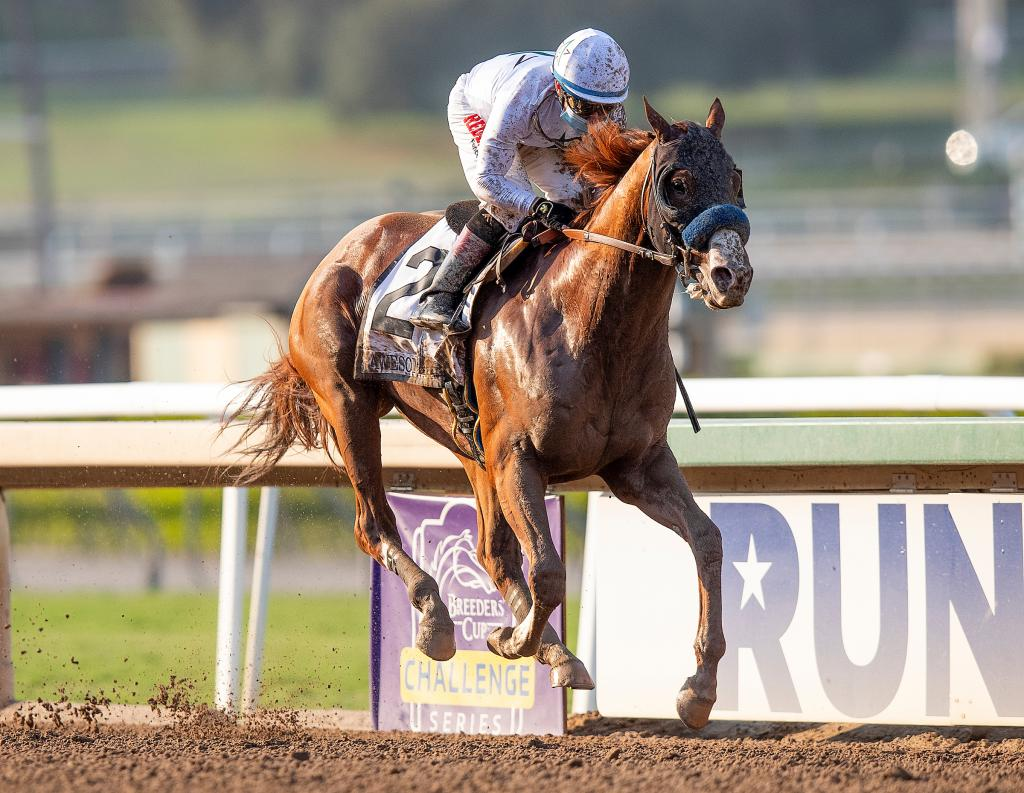 Multiple Grade 1 winner and probable Breeders' Cup Classic favorite Improbable. (Eclipse Sportswire)