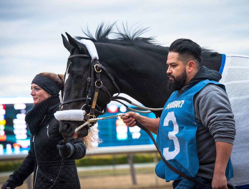 Graded stakes winner Independence Hall (Eclipse Sportswire)