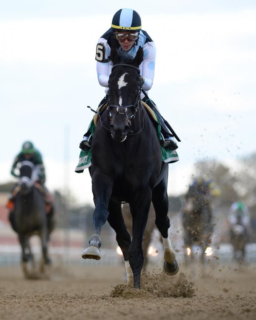 Graded stakes winner Independence Hall (Adam Coglianese/NYRA)
