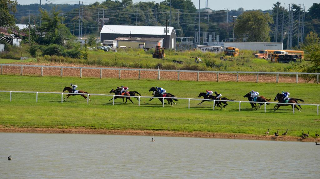 Even geese watch the races at Kentucky Downs. (Melissa Bauer-Herzog/America's Best Racing)