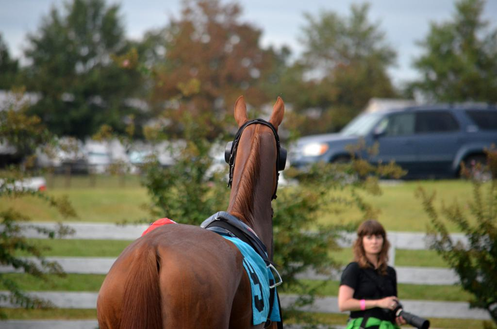 The girls closed out the Kentucky Downs card in the Kentucky Downs Lady Sprint. Anusara was more interested in posing for cameras than walking around the paddock (she finished last). (Melissa Bauer-Herzog/America's Best Racing)
