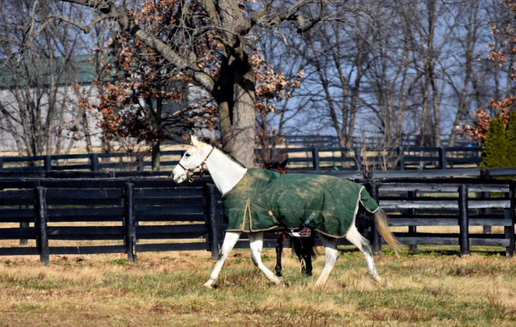Kennedy in the pasture. (Melissa Bauer-Herzog photo)