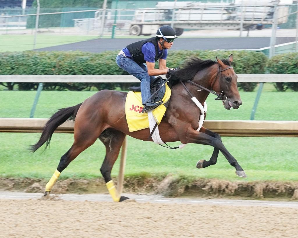 Grade 2 winner King Guillermo during morning exercise.