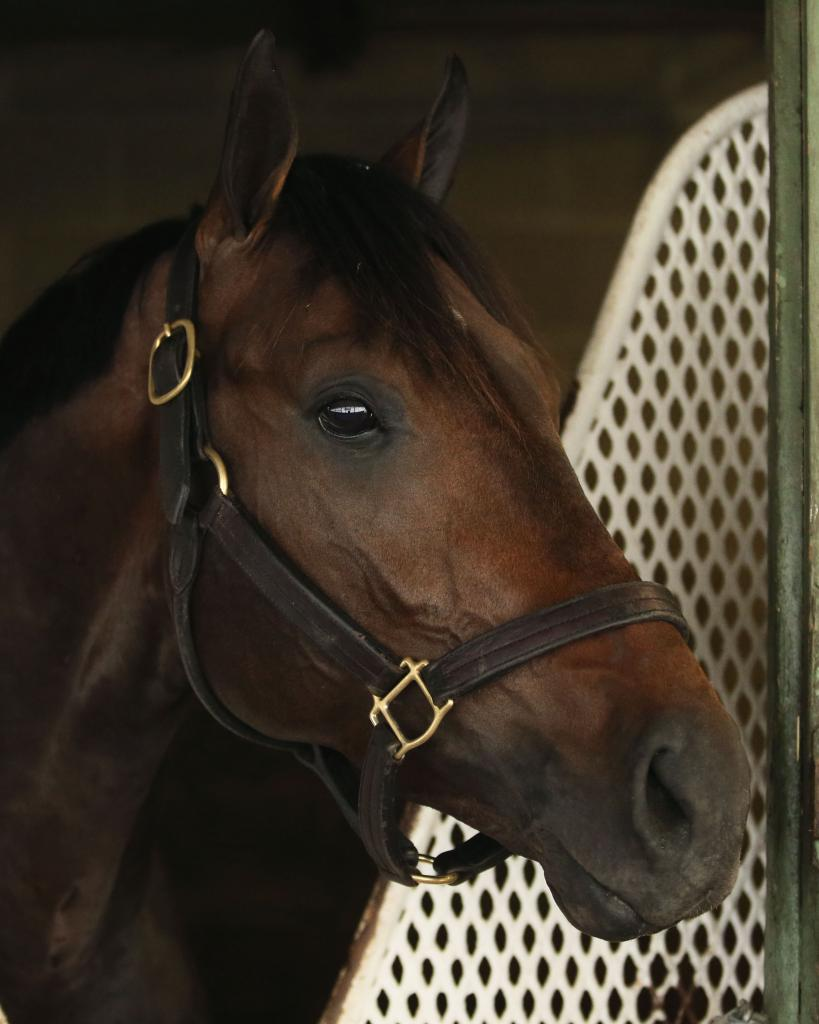 Stakes winner Last Judgment (Coady Photography)