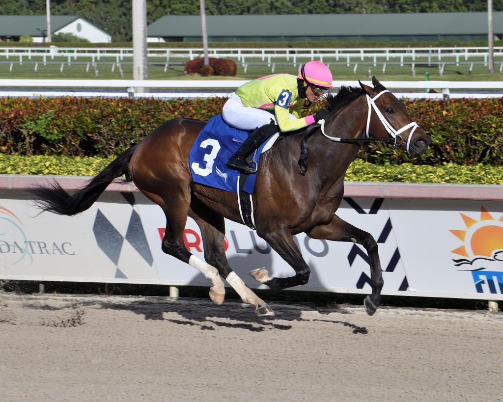 Stakes winner Last Judgment (Lauren King/Gulfstream Park)